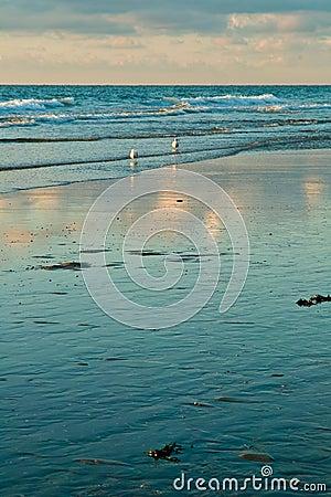 Sea and the seagulls