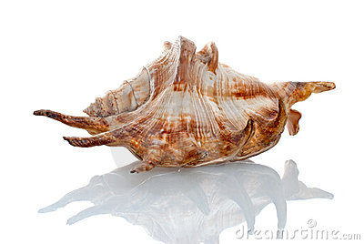Sea seashell