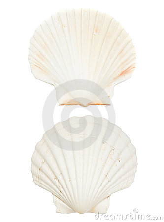 Free Sea Shell Stock Images - 14050194