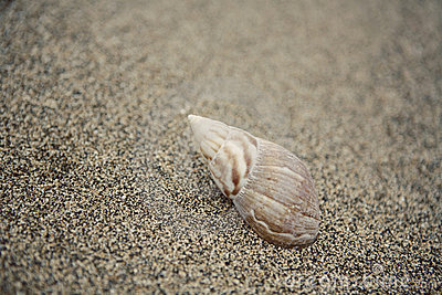 Sea Shell Stock Image - Image: 20238251