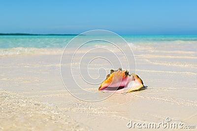 Sea shell in the beach