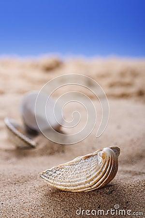 Sea shell on beach sand and blue sky background