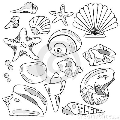 Free Sea Shell Collection Royalty Free Stock Photo - 4878485