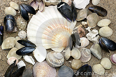 Sea shell collection on the beach