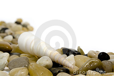 Sea shell on colorful pebble stones