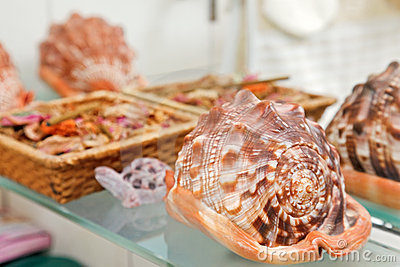 Sea shell decor