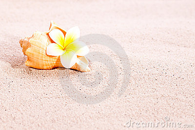 Sea shell and flower on beach sand