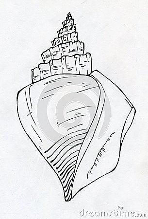 Sea shell ink sketch