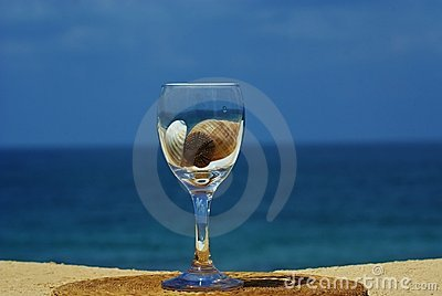 Sea shell inside of  glass of wine