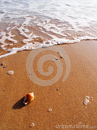 Free Sea Shell On Sunny Beach Royalty Free Stock Photography - 28945677