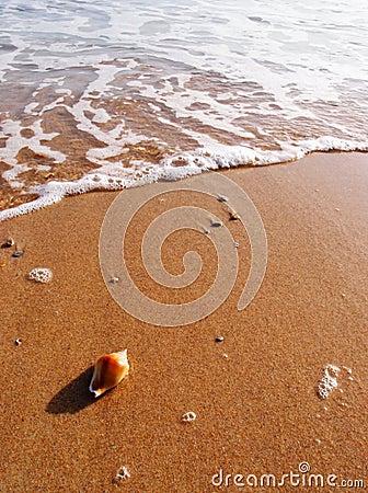 Free Sea Shell On Sunny Beach Royalty Free Stock Photography - 28945677