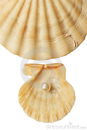 Sea shell and pearl