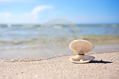 Sea shell with pearl