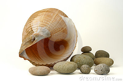 Sea shell and round stones