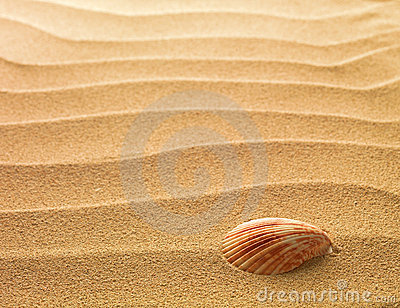 Sea shell with sand