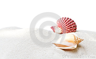 Sea shell with sand on white background