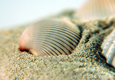 Sea Shell on sands