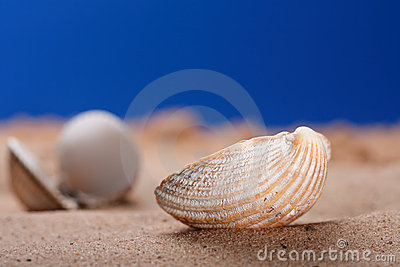 Sea shell seashell on beach sand and blue sky