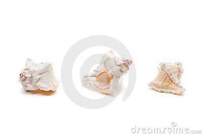 Sea shell series
