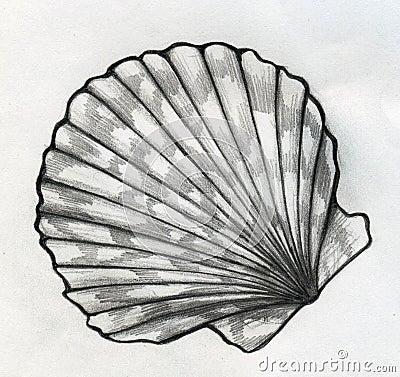 Sea Shell Sketch Stock Illustration Image 44319160