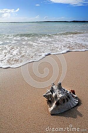 Sea Shell On Tropical Beach