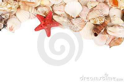 Sea shell on a white