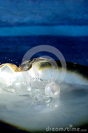 Free Sea Shell With Pearl Stock Image - 51481231