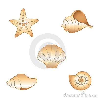 Free Sea Shells Stock Photos - 16718633