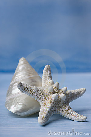 Free Sea Shells And Star Fish On Blue Watercolor Royalty Free Stock Images - 7134759