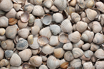 Sea shells, background