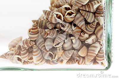 Sea shells in a bottle
