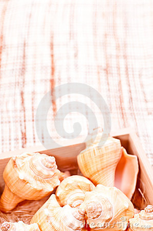 Sea shells in a box on a coconut mat