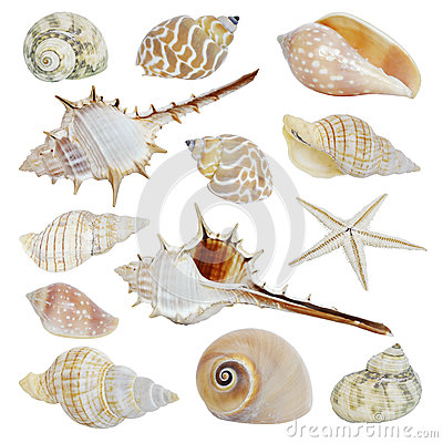 Free Sea Shells Collection Stock Images - 33001074