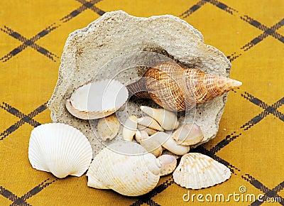 Sea shells and coral