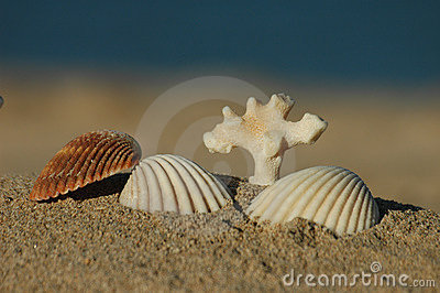 sea shells and dead coral