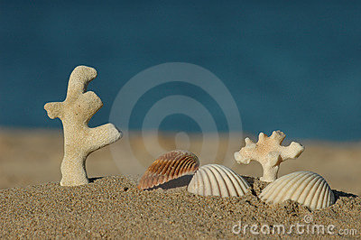 sea shells and dead corals