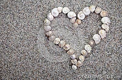 Sea shells Heart