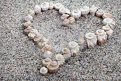 Sea shells Heart