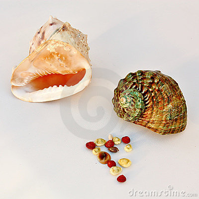 Sea shells - helmet and turban