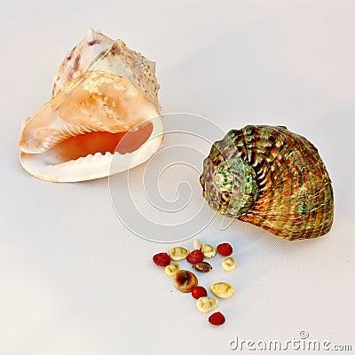 Sea shells - helmet and turban