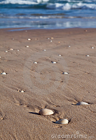 Sea shells lying in wet sand on the beach