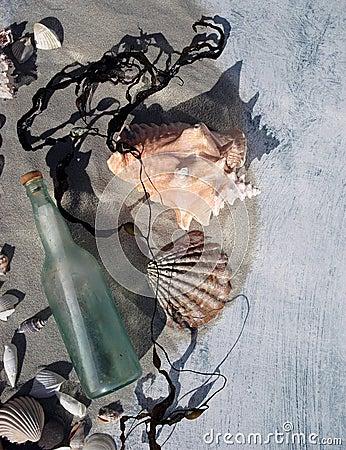 Sea Shells and Message