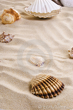 Free Sea Shells On The Beach Royalty Free Stock Images - 19386339