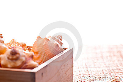 Sea shells in a pine wood box