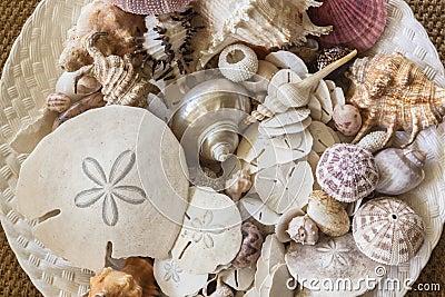 Sea Shells Plate