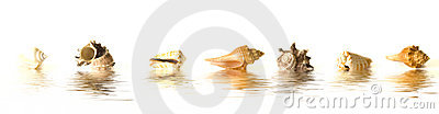Sea shells reflections