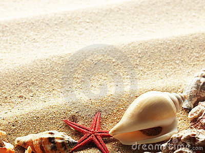 Sea Shells on Sand Border