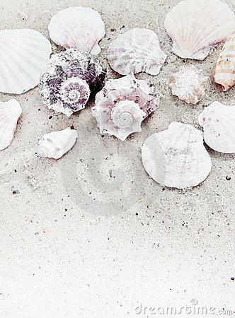 Sea Shells on Sand Vertical Border