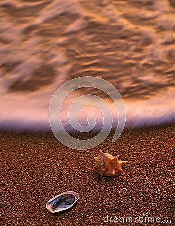 Sea shells on sandy beach 1