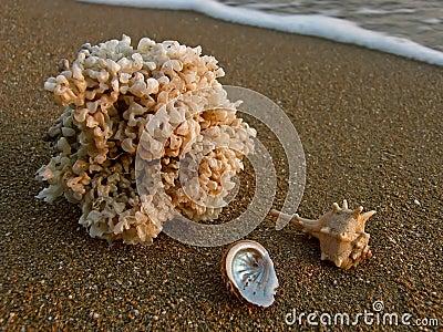 Sea shells at sandy beach
